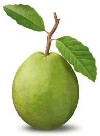 Guava Vitamín C