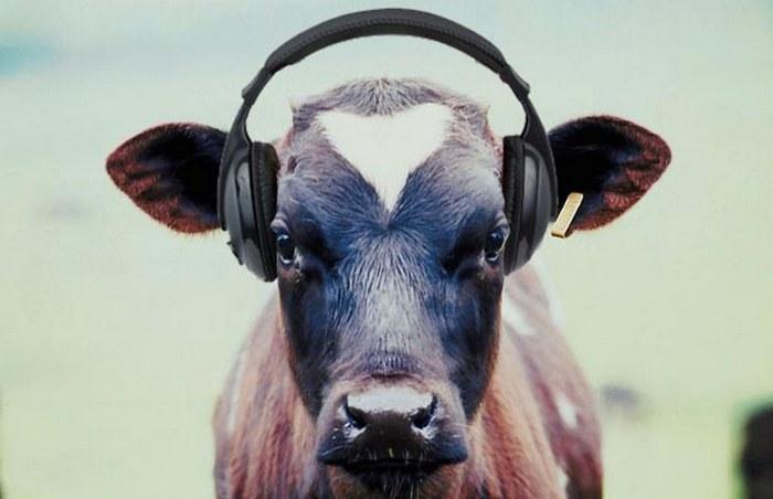To, čo 2 austrálski vedci zistili o hudbe a cvičení ťa asi prekvapí